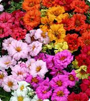 Семена цветов портулака крупноцветкового Formula Mixed 0,1 г