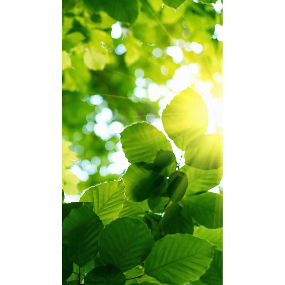 Обогреватель-картина инфракрасный настенный Shine EK-51 250W, 106х60 см, Листья, 028-1
