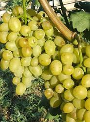 Виноград Арни