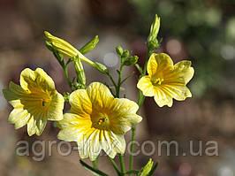 Семена цветов сальпиглоссиса Yellow 100 драже