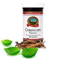 Cordyceps/ Кордицепс НСП •  Мощный иммуномодулятор - можно при аутоиммунных заболеваниях