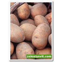 Картофель Тетерев 3 кг ФХ Лилия