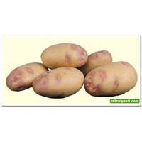 Картофель Пикассо 5 кг