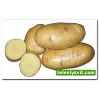 Картофель Сантэ 3 кг ФХ Лилия