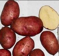 Картофель Родзинка 3 кг ФХ Лилия