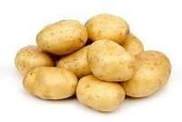 Картофель Сорокодневка 5 кг