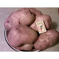 Картофель Славянка 3 кг ФХ Лилия