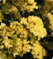 Семена цветов статицы Золотой берег DeepYellow 10 г