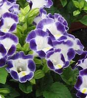 Семена цветов торении Адажио Blue / White 100 драже