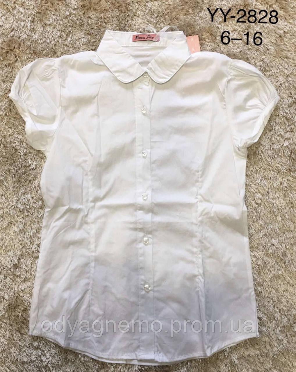 Блуза для девочек Lemon Tree,  6-16 лет. Артикул: YY2828