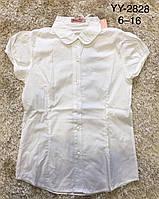 Блуза для девочек Lemon Tree,  6-16 лет. Артикул: YY2828 , фото 1