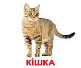 Комплект карток Свійські тварини з фактами, фото 2