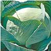 ЛЕКСИКОН F1 - капуста белокочанная, Syngenta 2 500 семян