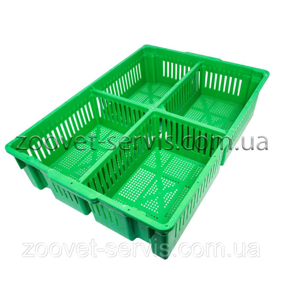 Великий ящик для перевезення курчат на 4 відсіку Тип-2