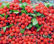 Редис  Дабел F1 Nunhems 10000 семян