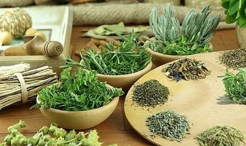 Лечебно-профилактические растения