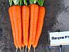 Морковь Лагуна F1/Laguna F1 Nunhems, 25000 семян