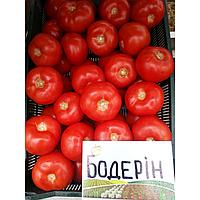 БОДЕРИН  F1 - семена томата, Syngenta, фото 1