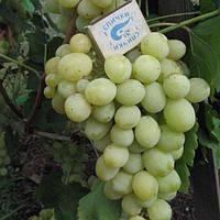 Виноград Тузлівський велетень
