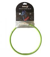 Ошейник светящийся USB AnimAll для собак 70см
