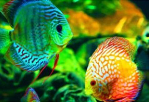 Алмазная мозаика Тропические рыбки, 30*40см, без рамки, в коробке 39*8*5см код: H8429