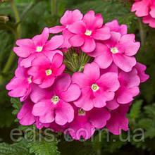 Вербена гибридная Розовая 0,1 г, семена Яскрава