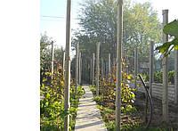 Столбики виноградные в Запорожье