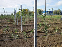 Столбики жб в Запорожье, фото 1