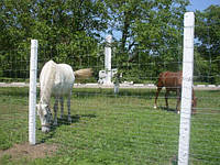 Столбы железобетонные для рабицы и винограда в Запорожье