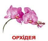 Комплект карток Квіти з фактами, фото 2