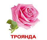 Комплект карток Квіти з фактами, фото 3