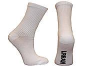 Жіночі шкарпетки середні ТЕНІС НЛ з написами 18-19 см 36-40 білий
