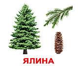 Комплект карток Дерева з фактами, фото 4
