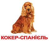 Комплект карток Породи собак з фактами, фото 2