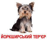 Комплект карток Породи собак з фактами, фото 4