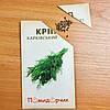 Насіння кропу Харківський-85, фото 2