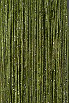 """Штори нитки """"Дощ"""" №19, оливковий, розмір 1х2м"""