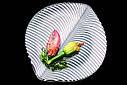 Салатник Nachtmann Mambo 25см (77677), фото 3