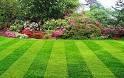 Газонная трава от 5 кг