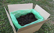 Пророщенная грибная коробка белого шампиньона быстрого выращивания ФАЗА 3