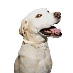 Нашийник протипаразитарний для собак Lesko Pet 003 White 63cm від бліх і кліщів