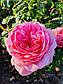 Ля Роз де Молинар (  La Rose de Molinard ), фото 3
