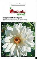 Жоржина Білий дим насіння (Hem Zaden) 0.1 г, фото 1