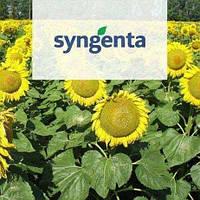 Пополнение посевного материала в лице Syngenta!