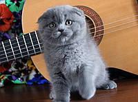 Чистокровные вислоухие котята