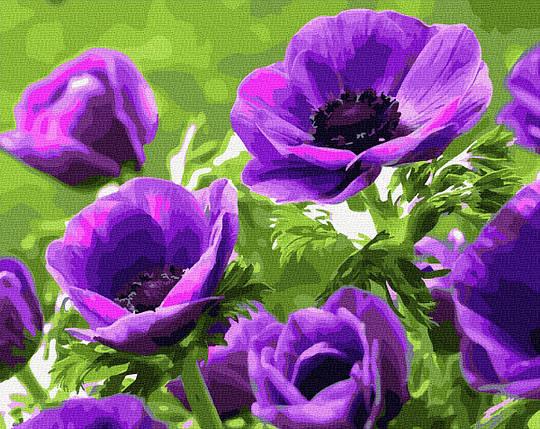 Картина по номерам - Фиолетовые маки Brushme 40*50 см. (GX27709), фото 2