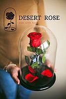 Вечная роза в колбе 32х22 см. Из Европы (КРАСНАЯ) Гарантия 3 года