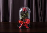 Роза в стеклянной колбе  32х22 см. Из Европы 3 года красоты (КРАСНАЯ)