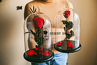 Подарок на 8 марта роза в стеклянной колбе  32х22 см. (КРАСНАЯ)