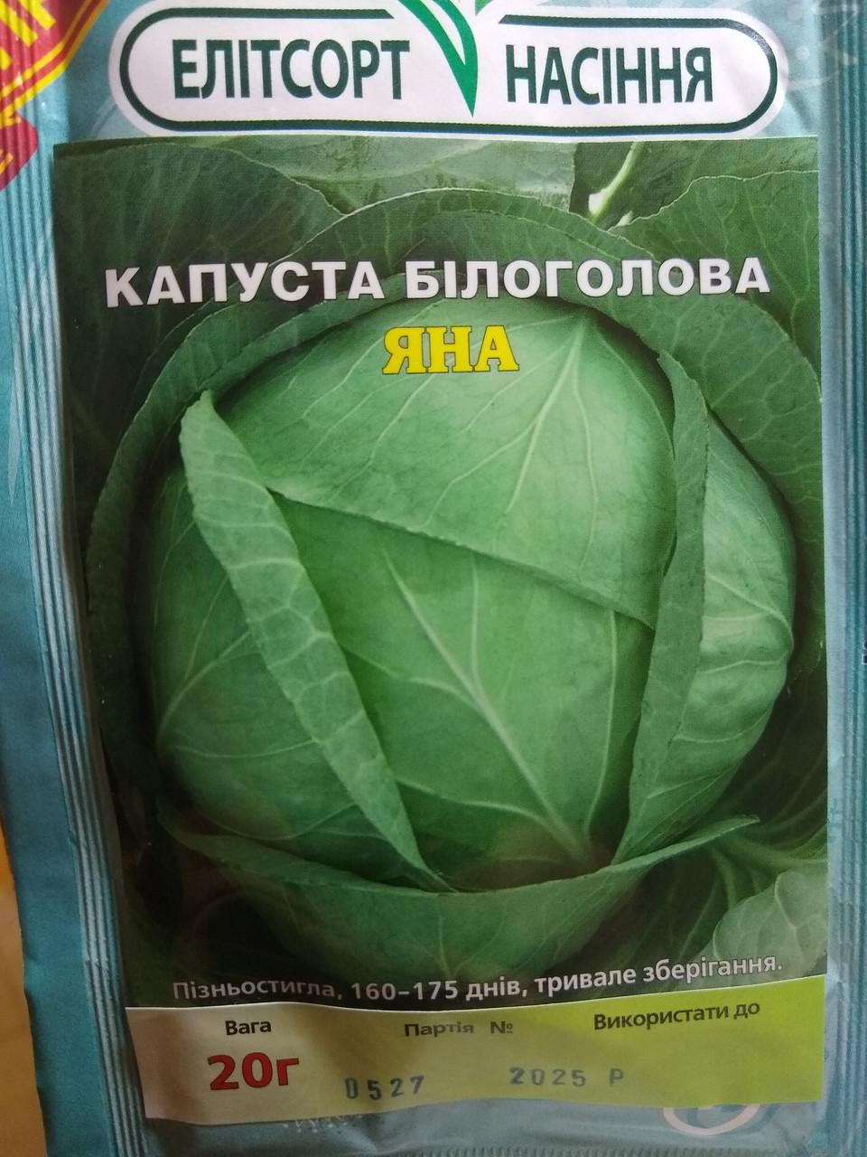 Насіння капусти білокачанної пізньої сорт Яна для зберігання 20 грам насіння Агрофірма Элитсорт